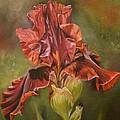 Burgundy Iris  by Cynthia Snider
