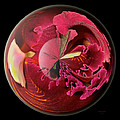 Burgundy Orchids In A Glass Globe by Phyllis Denton