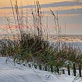 Buried Fence And Sea Oats Sunrise by Michael Thomas