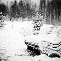 Buried In Snow by Evgeny Govorov