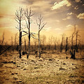 Burned Out Forest by Jill Battaglia