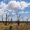 Burned Trees On Colorado Plateau by Christiane Schulze Art And Photography
