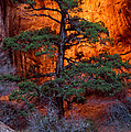 Burning Bush by Bob Phillips