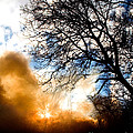 Burning Olive Tree Cuttings by Tim Holt