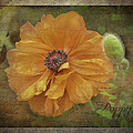 Burnished Poppy by Betty Denise