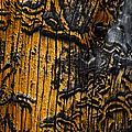 Burnt Beetle Maze  #9991 by J L Woody Wooden