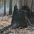 Burnt Tree Trunk by Juli Scalzi
