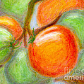 Burpee Tomatoes by Arlene Babad