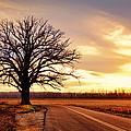 Burr Oak Silhouette by Cricket Hackmann