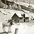 Burro In The Rockies by Art By - Ti   Tolpo Bader