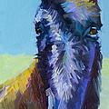 Burro Stare by Diane Whitehead