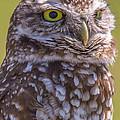 Burrowing Owl 001 by Stuart Rosenthal