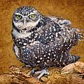 Burrowing Owl Portrait by Nikolyn McDonald
