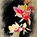 Bursting Magnolias by Ellen Cannon
