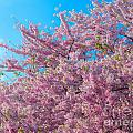 Bursting With Blossoms With A Hint Of Green by Jeff at JSJ Photography
