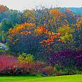 Bursting With Color 1 by Debbie Nobile