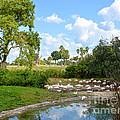 Busch Gardens Savannah by Carol  Bradley
