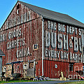 Bush And Bull Roadside Barn by Paul Ward