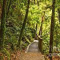 Bush Pathway Waikato New Zealand by Colin and Linda McKie