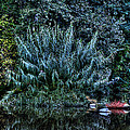 Bush Reflection by Isaac Silman