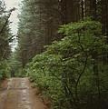 Bushroad by Mark Didine