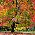 Busse Woods Fall Color by Ray Mathis