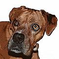 Buster Brown The Boxer by Sandra Clark