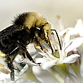 Busy As A Bee by Betty Depee
