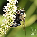 Busy As A Bee by Michelle DiGuardi