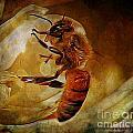 Busy Bee by Ben Yassa