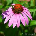 Busy Bee by Christine Dekkers