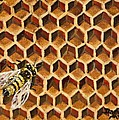 Busy Bee by Darice Machel McGuire