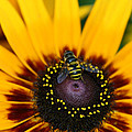Busy Bee by Denyse Duhaime
