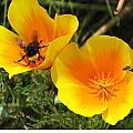 Busy Bee by Jill Bell