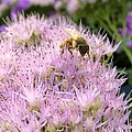 Busy Bee by Photographic Arts And Design Studio