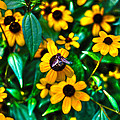 Busy Bee by Randy Aveille
