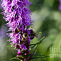Busy Bees by Ms Judi