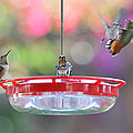 Busy Day At The Feeder by Lynn Bauer