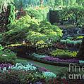 Butchard Gardens Vancouver Island by Bob Christopher