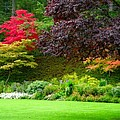 Butchart Gardens Lawn And Tree by Brian Hoover