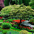 Butchart Gardens by Lisa Phillips