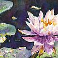 Butchart's Lily by John Dougan
