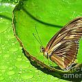 Butter On The Pond by Rhea Winscom