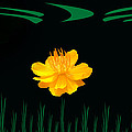 Buttercup Delight by Aimee L Maher ALM GALLERY