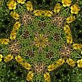 Buttercup Kaleidoscope by Valerie Kirkwood