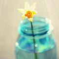 Buttercup Photography - Flower In A Mason Jar - Daffodil Photography - Aqua Blue Yellow Wall Art  by Amy Tyler