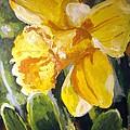 Buttercup by Susan Elizabeth Jones