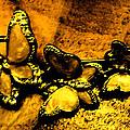 Butterflies 2 by Lovina Wright