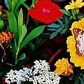 Butterflies by Daniel Thompson