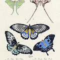 Butterflies I by Splendid Art Prints